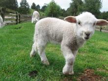 Sheep World NZ 047.JPG